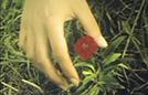 Les Fleurs oubliées
